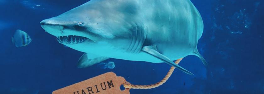 """Aquarium Leaks"". Inside the GRU's Psychological Warfare Program – Russia 's Secret Propaganda Unit."